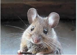 Mi è sembrato di vedere un ....topo!