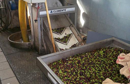 Il far-west italiano e la campagna delle olive